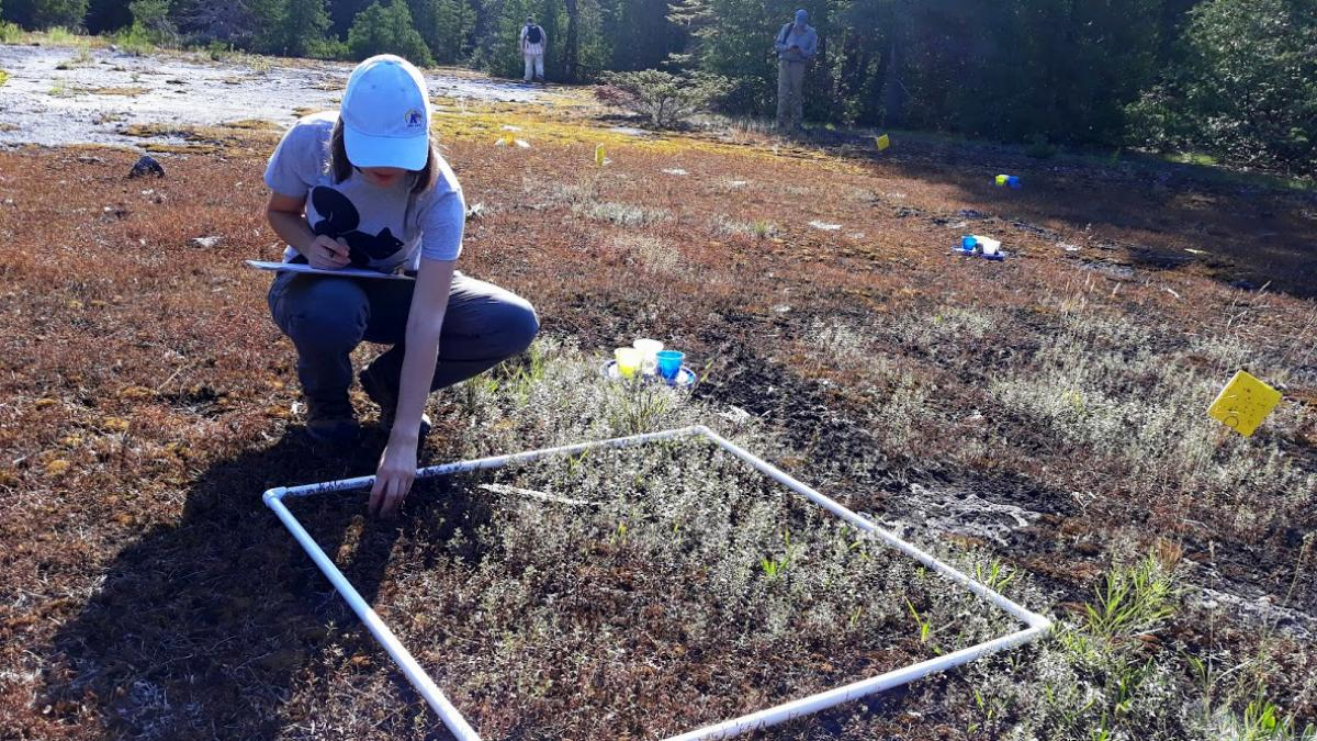 field researcher working with insects outdoors