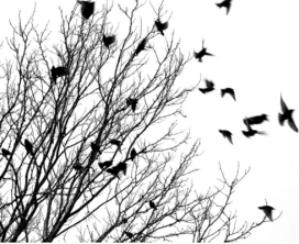 birds taking flight from tree