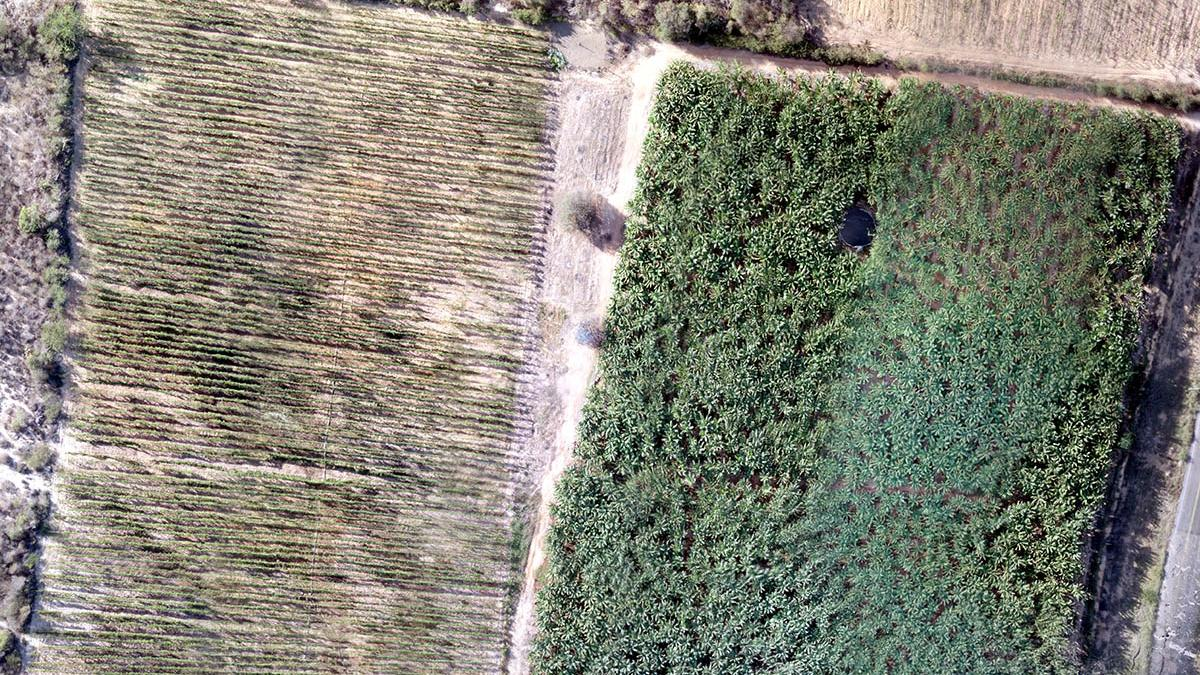 crops as seen from drone