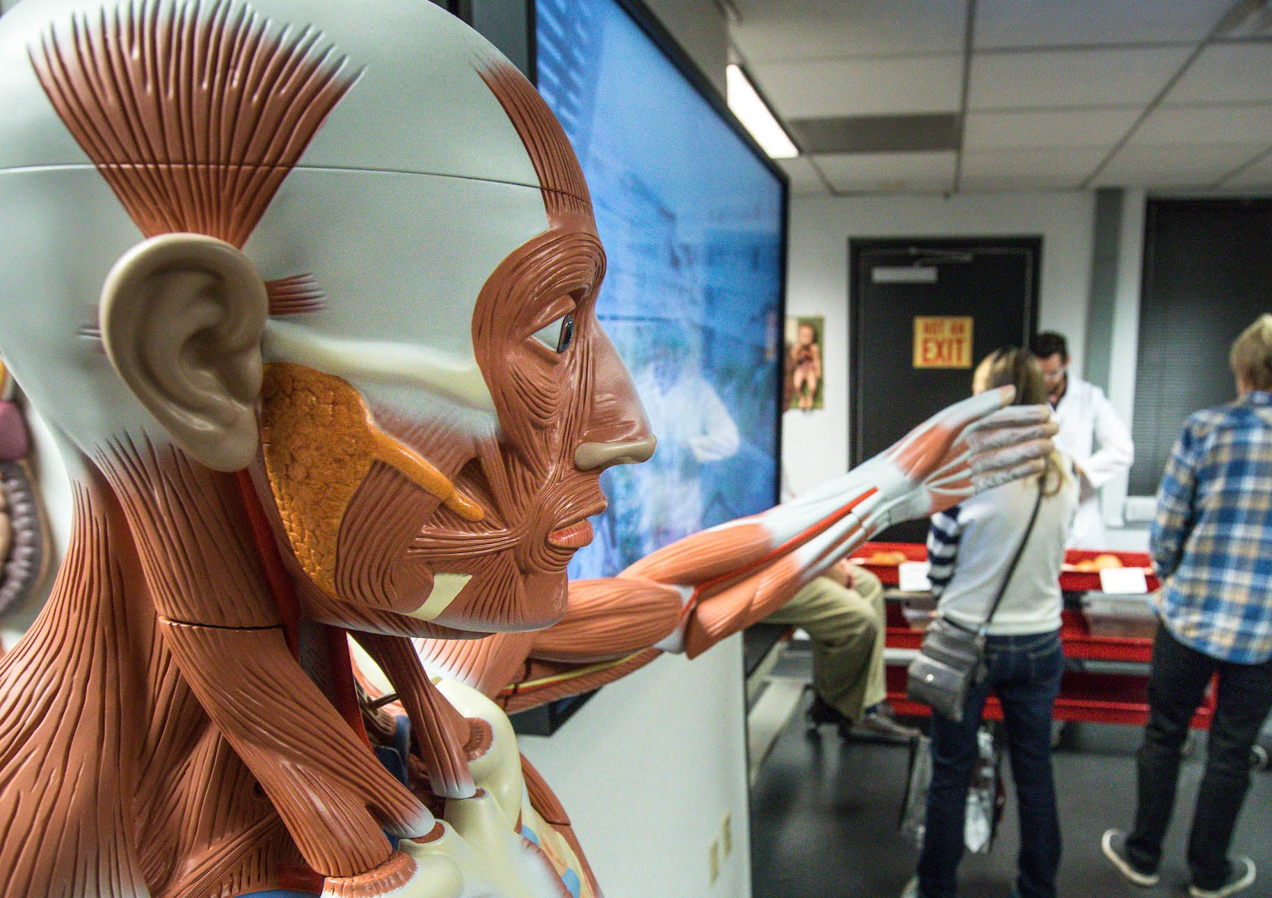 human anatomy model with outstretched arm in welcome