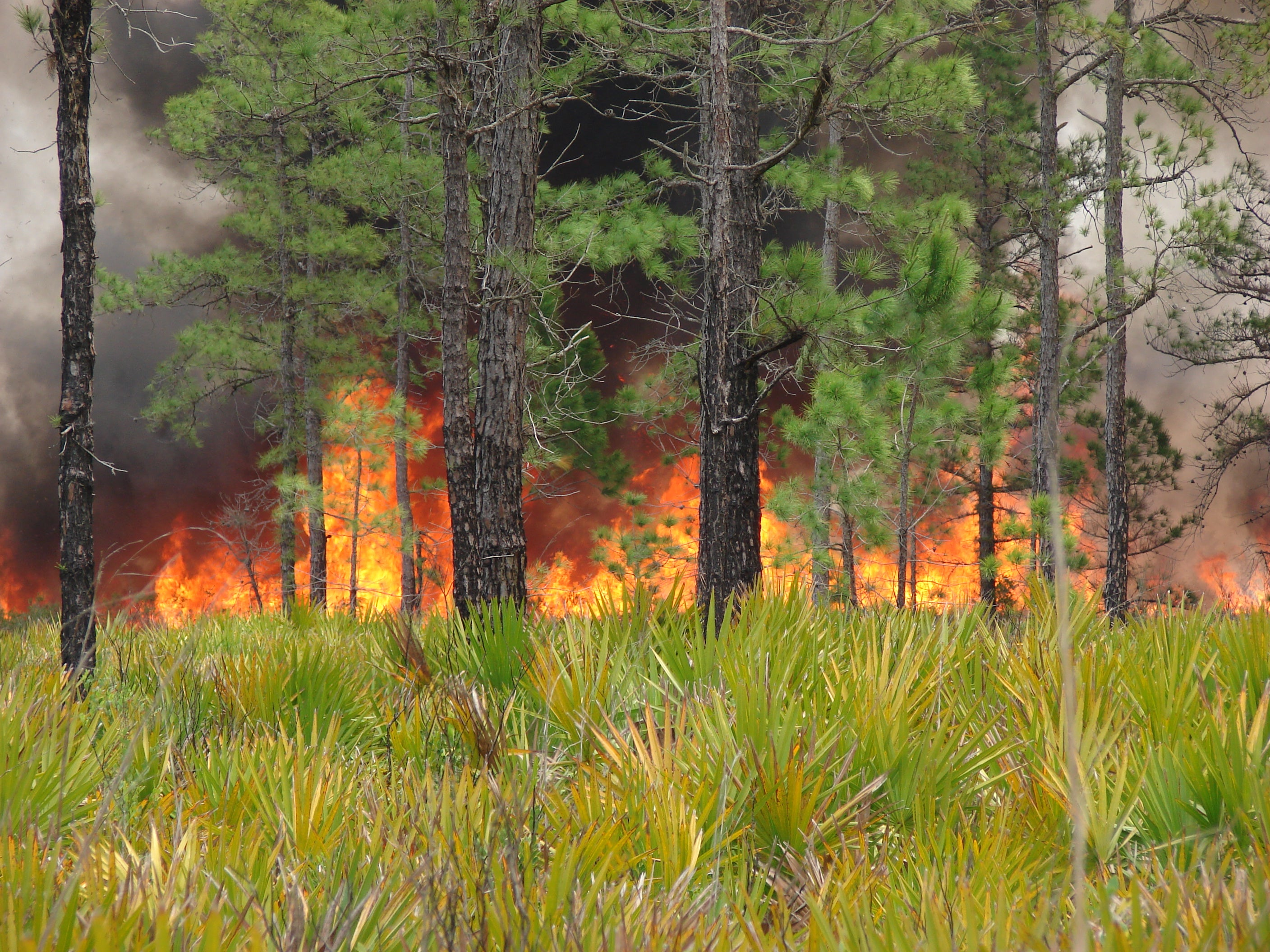 Forest fire scene: Steve Pyne has written many books about the history of fire around the world