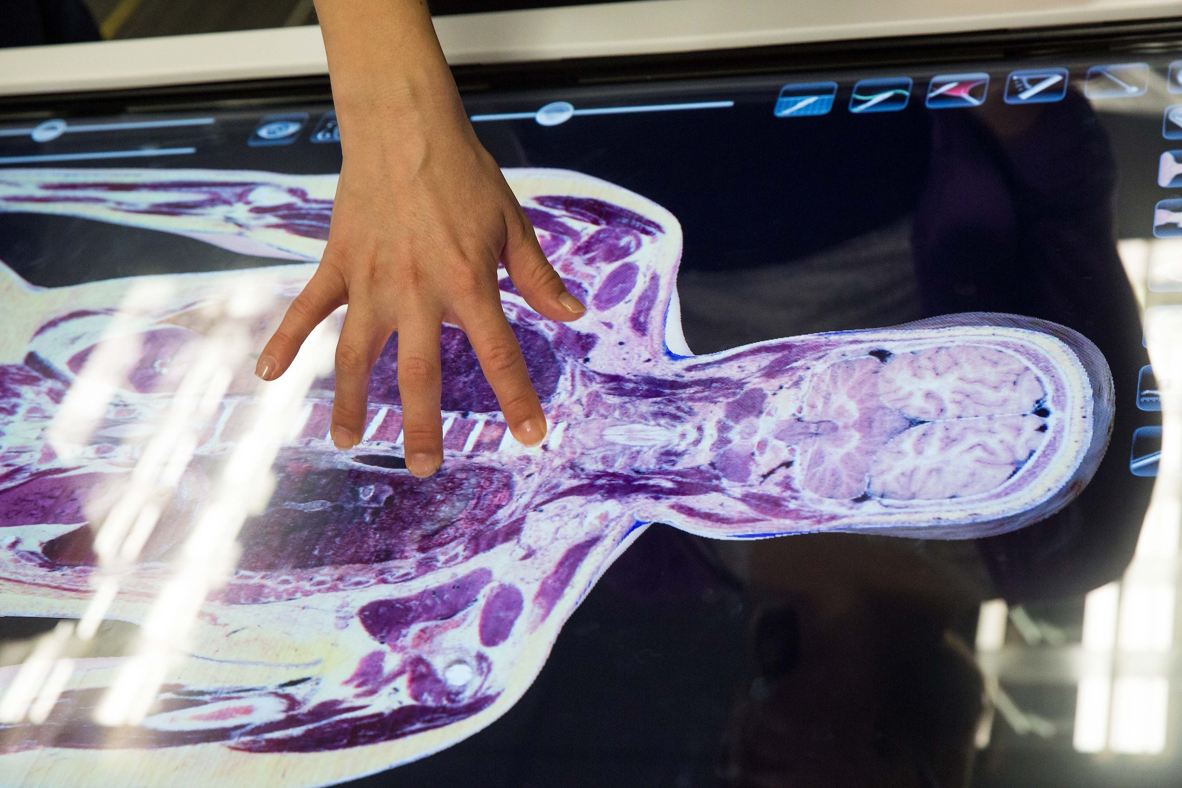 3-D table that displays cadaver information